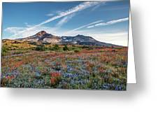 Wildflowers At Mt. St. Helen's Greeting Card