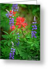 Wildflowers In Mountains Wilderness Greeting Card