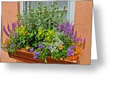 Window Box Blooms Greeting Card
