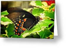 Wings Of Fancy Greeting Card