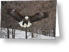 Wings Of Wonder Greeting Card
