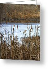 Winter Cattails Greeting Card