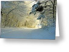 Winter Forest In The Warm Light From The Sunset Greeting Card by E Petersen
