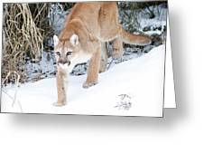 Winter Prowler Greeting Card