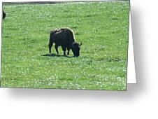 Wisconsin Buffalo Greeting Card
