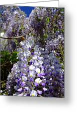 Wisteria Cascading Greeting Card