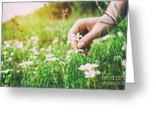 Woman Picking Up Flowers On A Meadow, Hand Close-up. Vintage Light Greeting Card