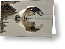 Wood Stork Winging It Greeting Card
