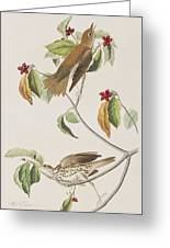 Wood Thrush Greeting Card