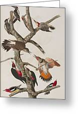 Woodpeckers Greeting Card