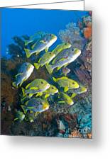 Yellow And Blue Striped Sweeltip Fish Greeting Card by Mathieu Meur
