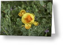 Yellow And Orange Poppy Greeting Card