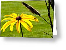 1 Yellow Daisy 2 Yellow Bugs Greeting Card
