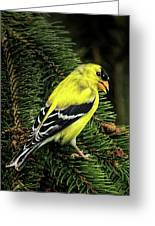 Yellow Finch Greeting Card