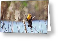 Yellow-headed Blackbird Greeting Card