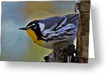 Yellow Throat Warbler Greeting Card