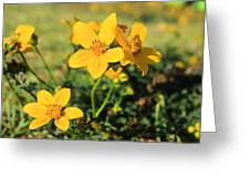 Yellow Wildflowers In A Field Greeting Card
