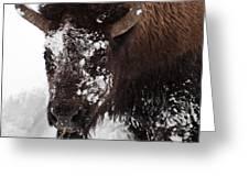 Yellowstone Buffalo Greeting Card