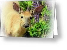 Young Buck Among The Lupin Greeting Card