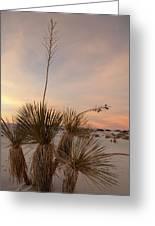 Yucca At Sunset Greeting Card