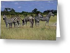 Zebra Group Greeting Card