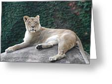 Zoo Lion Greeting Card