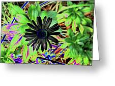 10-15-16--4996 # 2 Montauk Daisy Don't Drop The Crystal Ball Greeting Card
