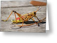 10- Lubber Grasshopper Greeting Card