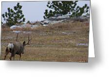 10 Point Buck Heads West Greeting Card