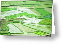 Rice Fields Scenery Greeting Card