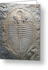 Trilobite Fossil Greeting Card by Sinclair Stammers