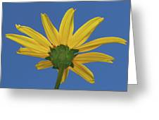 Wild Sunflower Stony Brook New York  Greeting Card