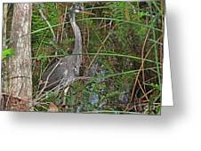 100- Great Blue Heron Greeting Card