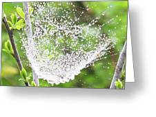 10000-spider Web1 Greeting Card