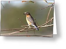 105319 - Bluebird Greeting Card