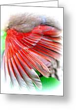 1055-001 - Northern Cardinal Greeting Card