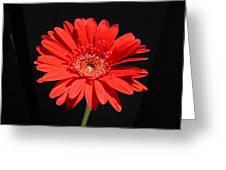 1067 Greeting Card