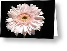 1071c Greeting Card
