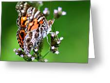 1074- Butterfly Greeting Card