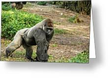 10899 Gorilla Greeting Card
