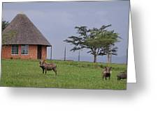 South Africa Greeting Card