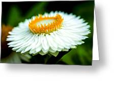 Flower Blossom Greeting Card