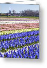 Hyacinths Fields Greeting Card