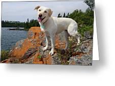 Betsy On Horseshoe Bay Island Greeting Card