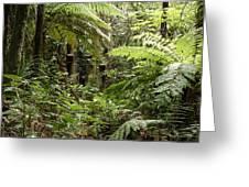 Jungle 30 Greeting Card