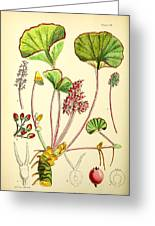 Illustrations Of The Flowering Plants And Ferns Of The Falkland Islands Greeting Card