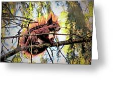 11451 Red Squirrel Sketch Greeting Card