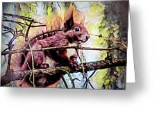 11452 Red Squirrel Sketch Square Greeting Card