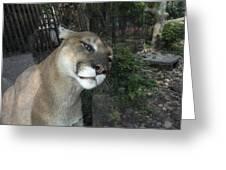 1153 - Mountain Lion Greeting Card