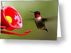 1164 - Hummingbird Greeting Card